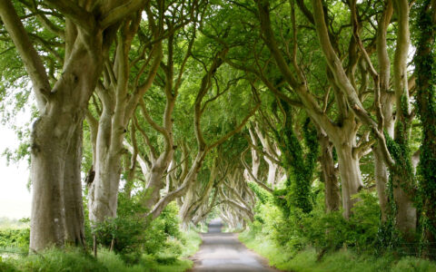 Dark Hedges - Lindy Buckley - cc