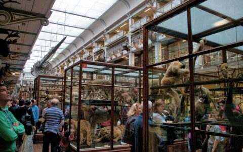 The Natural History Museum of Dublin